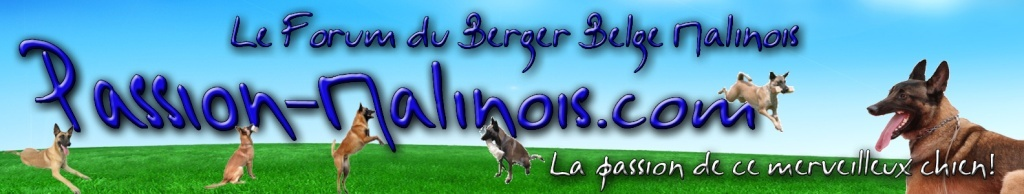 Le Forum du Berger Belge Malinois