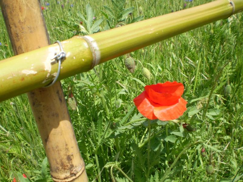 http://i16.servimg.com/u/f16/09/02/08/06/20110510.jpg