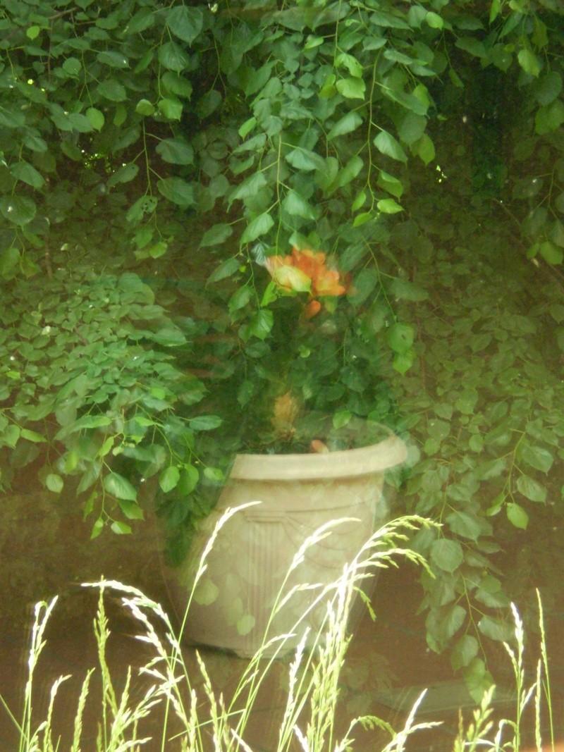 http://i16.servimg.com/u/f16/09/02/08/06/a310.jpg