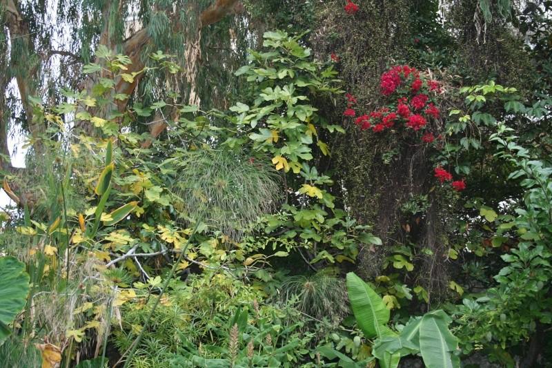 identifiee muehlenbeckia complexa petite inconnue au jardin forum de jardinage. Black Bedroom Furniture Sets. Home Design Ideas