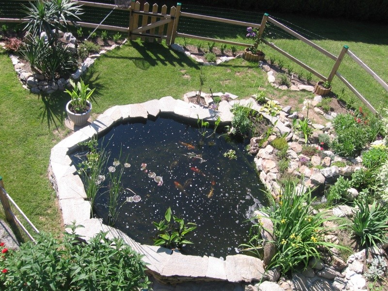 Nature bassin la mare et le bassin de jardin naturel for Construction bassin de jardin