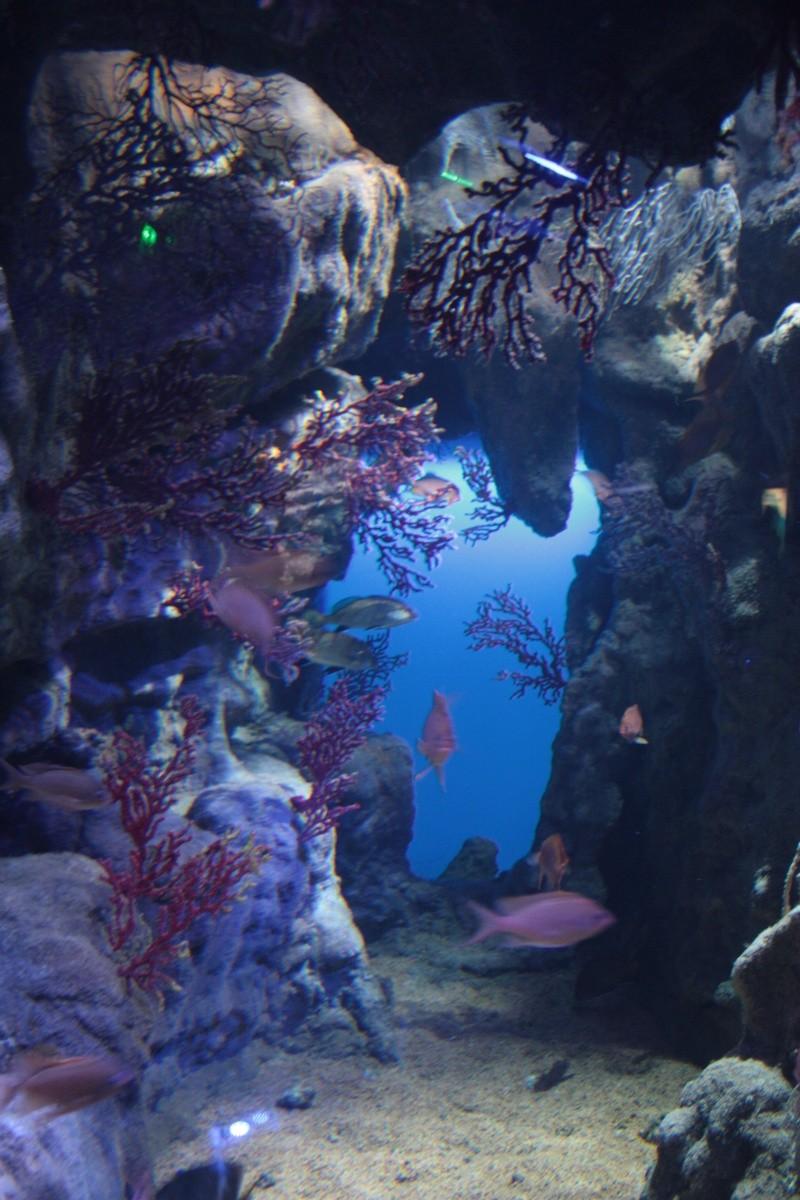 mare nostrum l aquarium de montpellier
