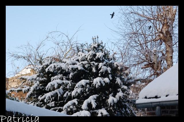 que de neige dans nature 55510
