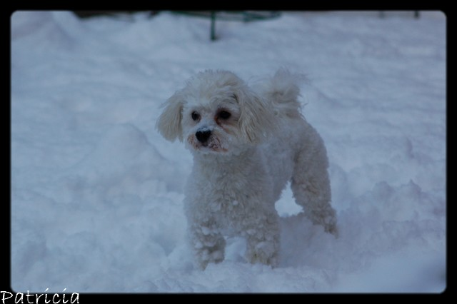 cachou dans la neige dans cachou 59110