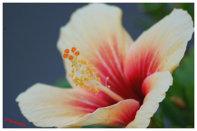 fleur210 dans Mes coups de coeur...