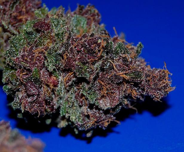 purple marijuana bud 28 - photo #2