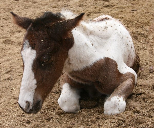 Foal Brag :) - Share yours :)