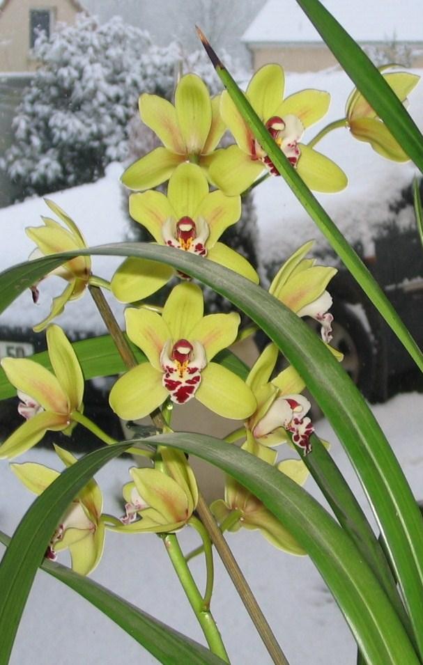 orchid10.jpg