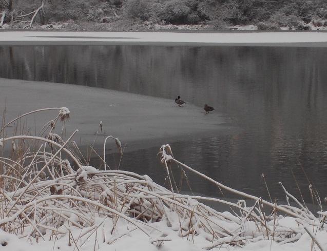 neige216.jpg