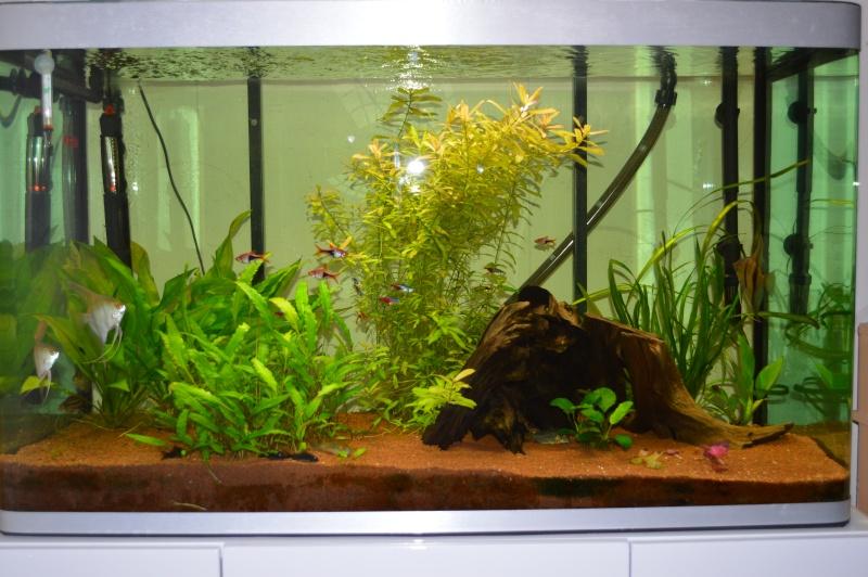 Aquarium osaka 260 for Aquarium osaka 260