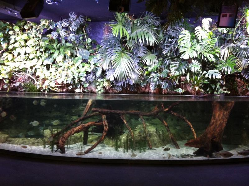 Projet de mur v g tal avec aquarium for Mur vegetal aquarium