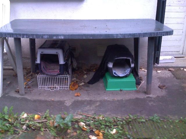 Cr er un abri contre l 39 hiver pour les chats errants for Abri exterieur chat